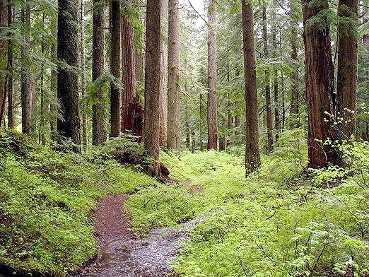 Фото - Що таке ліс?