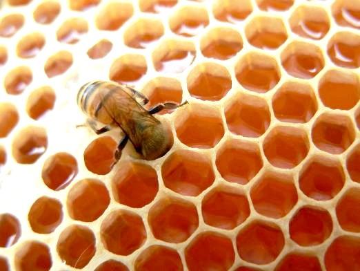 Фото - Що таке мед?