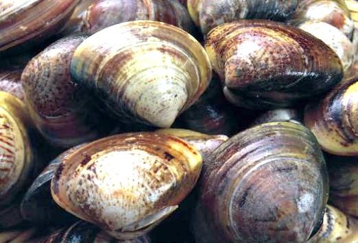 Фото - Що таке молюски?