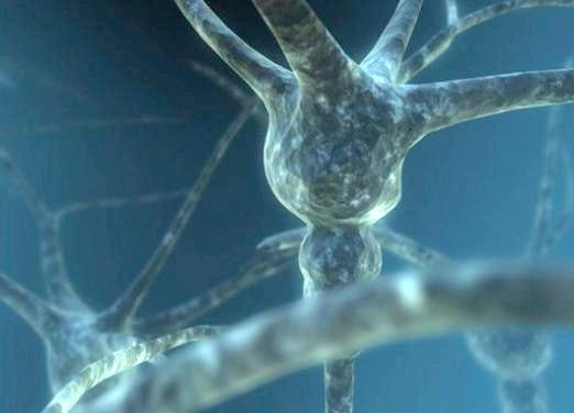 Фото - Що таке нейрон?