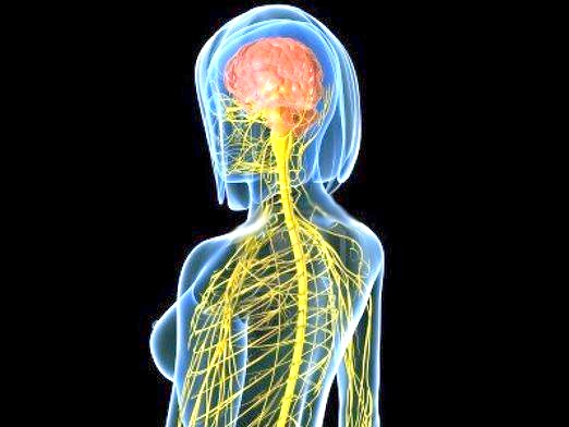 Фото - Що таке нервова система?