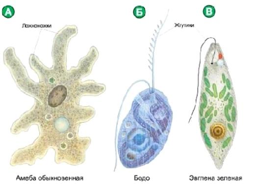 Фото - Що таке організм?