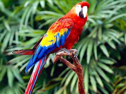 Фото - Що таке папуга?