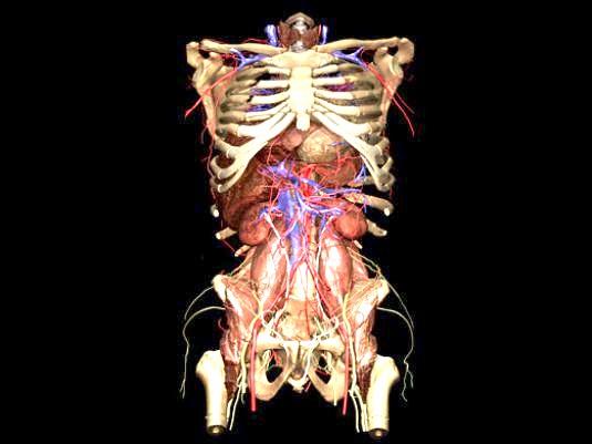 Фото - Що таке система органів?