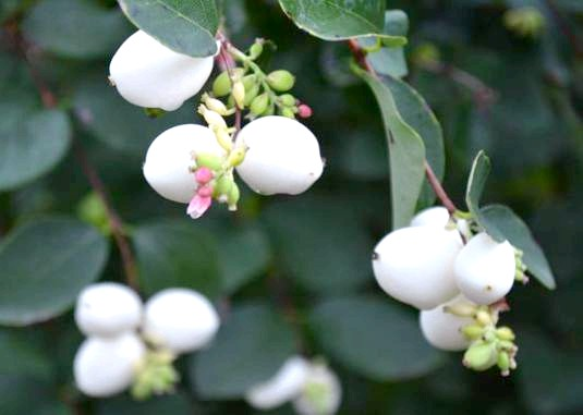 Фото - Що таке вегетація рослин?