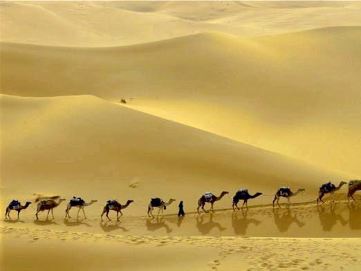 Фото - Що загрожує степах і пустелях?