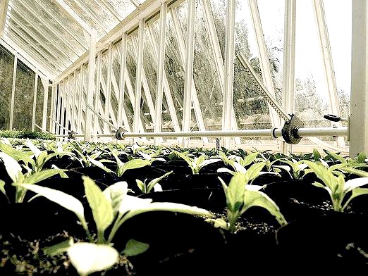 Фото - Що вигідно вирощувати?